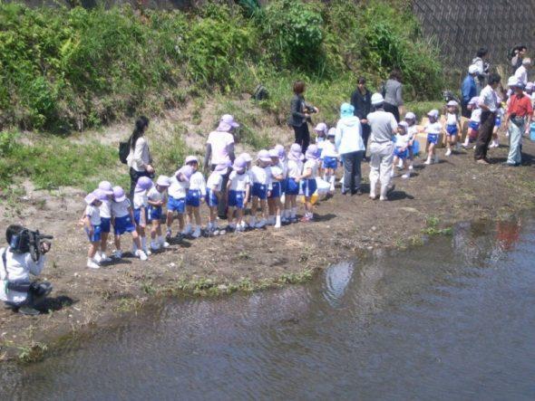 新川で稚魚の放流活動